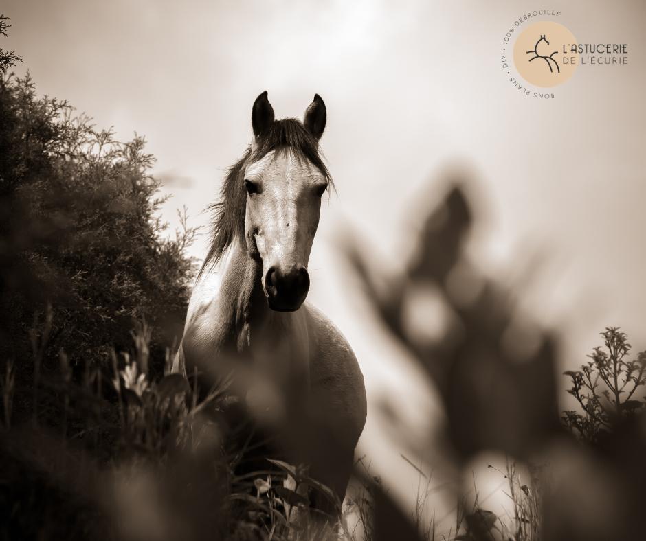 cheval en noir et blanc dans la nature