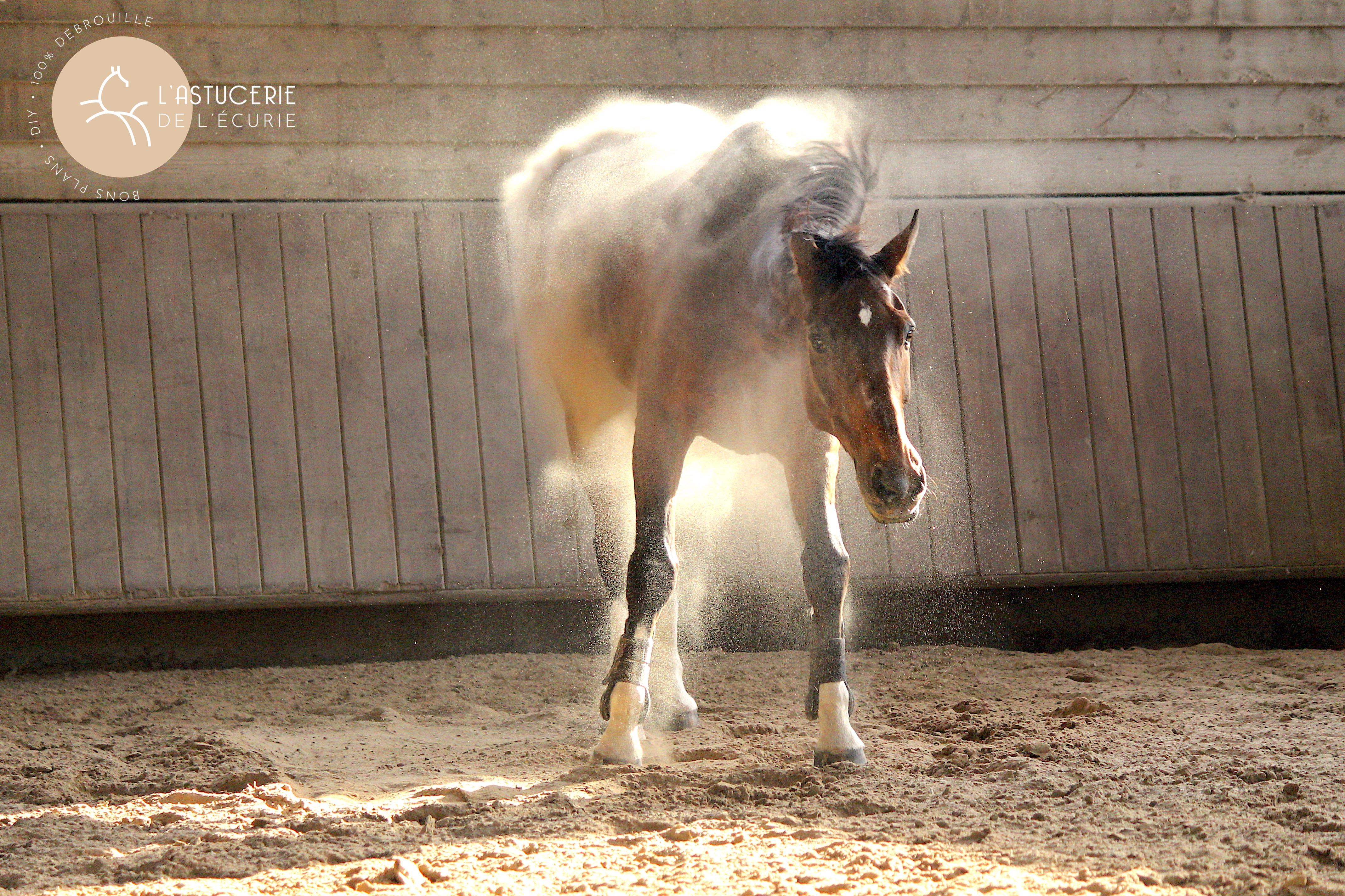 cheval plein de poussière qui se secoue